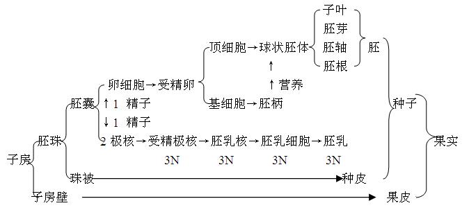 新东方李泓渟高考生物冲刺班